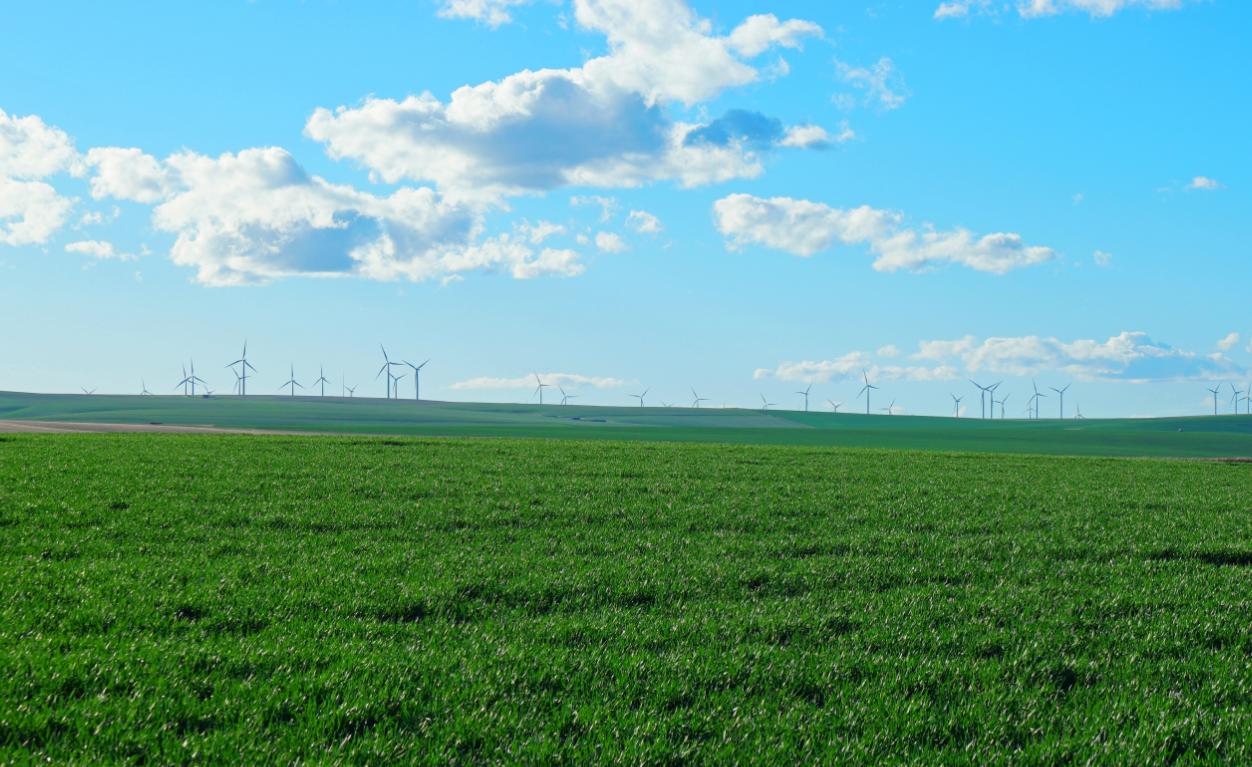 Eoliennes dans un champs verdoyant