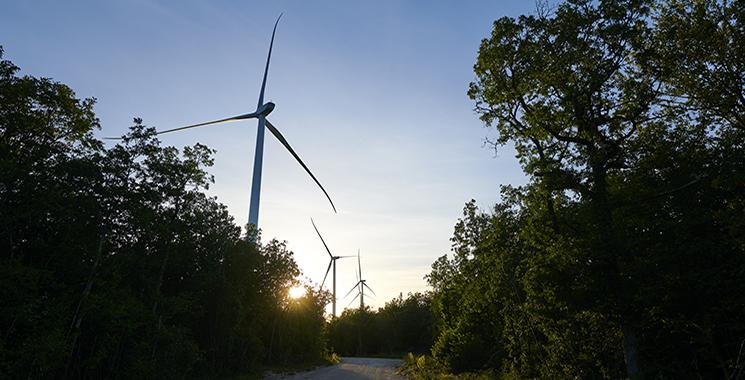 Parc éolien de Velocita en forêt