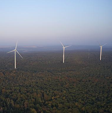 parc éolien en forêt